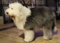 Best Dog Collars For Old English Sheepdogs