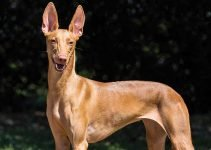 Best Dog Crates For Pharaoh Hounds
