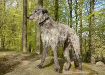 5 Best Dog Crates for Scottish Deerhounds (Reviews Updated 2021)