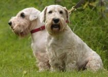Best Dog Crates For Sealyham Terriers