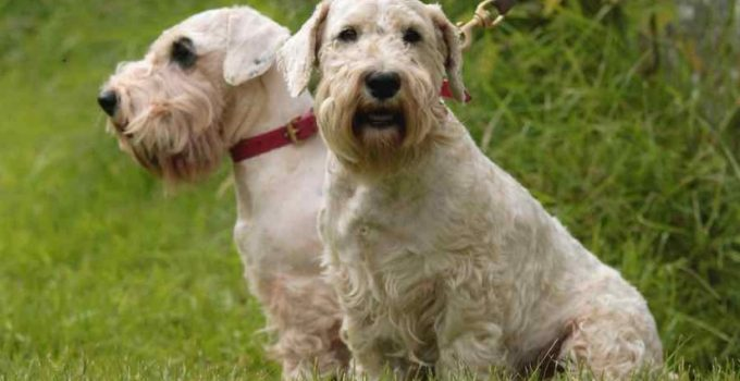 Best Dog Crates For Sealyham Terriers