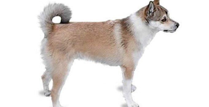 Best Dog Shampoos For Norwegian Lundehunds