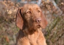 5 Best Dog Beds for Wirehaired Vizslas (Reviews Updated 2021)