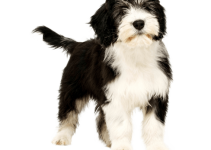 5 Best Dog Brushes for Polish Lowland Sheepdogs (Reviews Updated 2021)