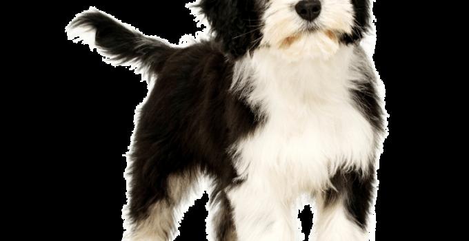Best Dog Brushes For Polish Lowland Sheepdogs