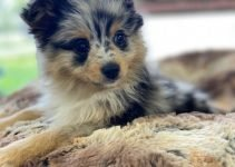 Best Dog Crates For Aussie Poms