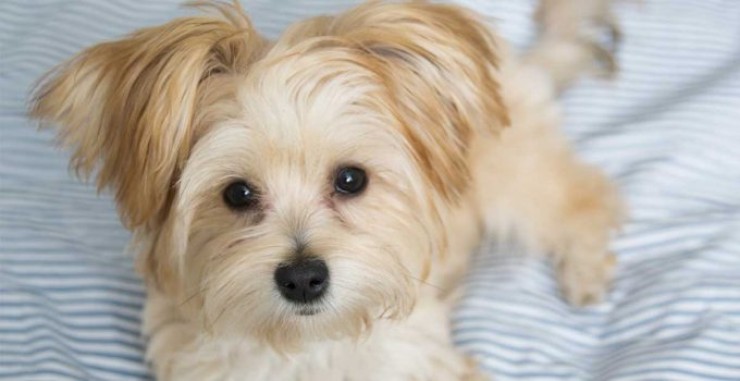 Best Dog Crates For Morkies