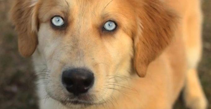 Best Dog Foods For Goberians