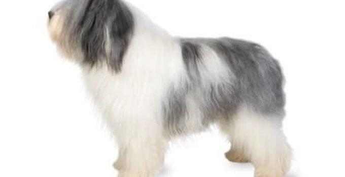 Best Dog Shampoos For Polish Lowland Sheepdogs