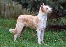 Best Dog Shampoos For Portuguese Podengos