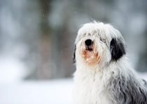 Best Dog Toys For Polish Lowland Sheepdogs