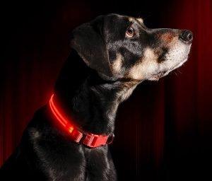 Illumiseen Led Usb Rechargeable Nylon Dog Collar