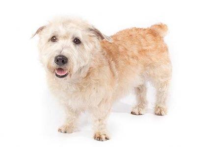 Best Dog Beds For Glen Of Imaal Terriers