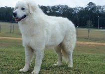 5 Best Dog Beds for Kuvasz (Reviews Updated 2021)