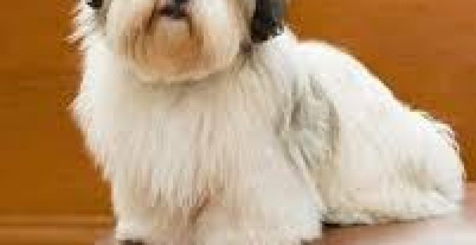 Best Dog Beds For Lhasa Apsos