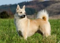 5 Best Dog Beds for Norwegian Buhunds (Reviews Updated 2021)
