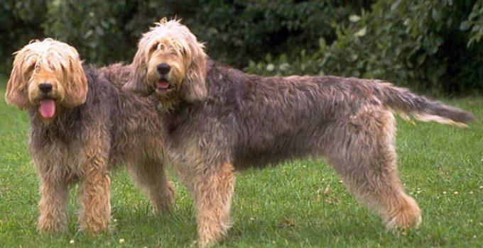 Best Dog Beds For Otterhounds