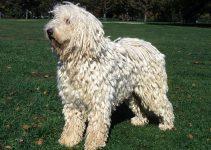 5 Best Dog Brushes for Komondors (Reviews Updated 2021)