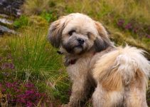 Best Dog Brushes For Lhasa Apso