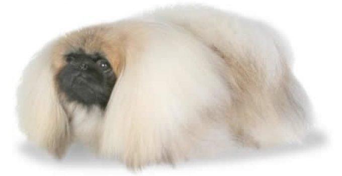 Best Dog Brushes For Pekingese