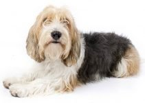 Best Dog Brushes for Petit Basset Griffon Vendeens