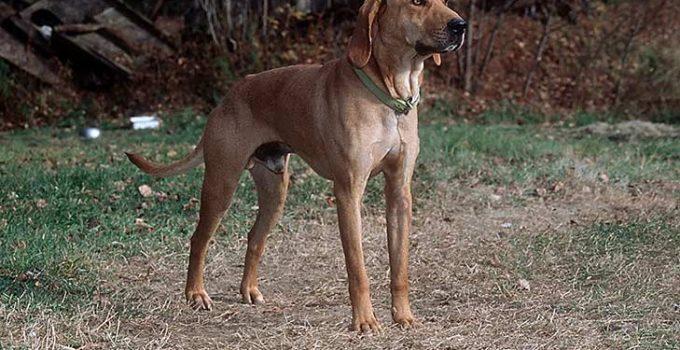 Best Dog Crates For Plott Hounds