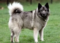 Best Dog Foods For Norwegian Elkhounds