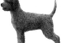 Best Dog Harnesses For Lagotti Romagnoli