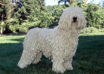 Best Dog Muzzles For Komondors