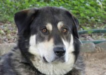 Best Dog Products For Alaskan Maladors