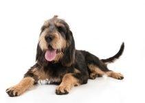 Best Dog Toys For Otterhounds