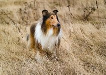 Best Dog Products For Collies
