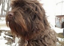 10 Best Dog Products for Affen Spaniels (Reviews Updated 2021)