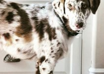 10 Best Dog Products for Aussiedors (Reviews Updated 2021)