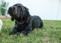 5 Best Dog Products for Bascottie (Reviews Updated 2021)