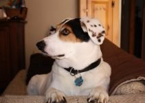 Best Dog Products For Beaglemation