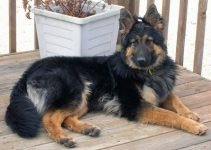 5 Best Dog Products for Bohemian Shepherds (Reviews Updated 2021)