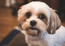 5 Best Dog Products for Bolo-Tzu (Reviews Updated 2021)