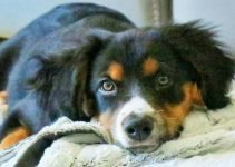 5 Best Dog Products for Border Collie Britts (Reviews Updated 2021)