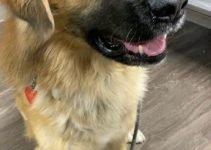 Best Dog Products For Bullsky Mastiffs