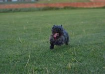 5 Best Dog Products For Cairland Terriers (Reviews Updated 2021)