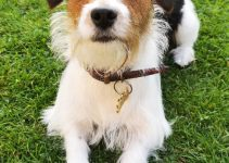 Best Dog Products For Cav A Jack