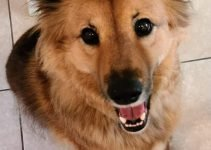 Best Dog Products For Chow Shepherds