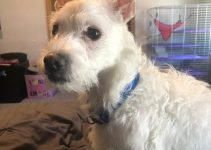 5 Best Dog Products For Cocker Westies (Reviews Updated 2021)