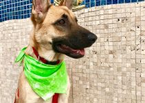 Best Dog Products For German Malinois