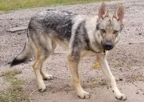 Best Dog Products For Czechoslovakian Wolfdogs