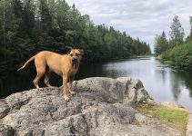 Best Dog Products For Dogo Canario