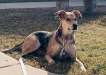 5 Best Dog Products for Dunker (Reviews Updated 2021)