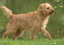 Best Dog Products For Dutch Smoushonds