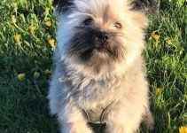 Best Dog Products For Ewokian